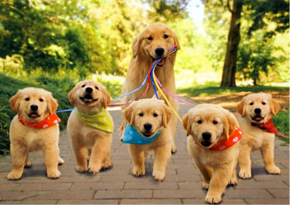 Golden Mom and Pups