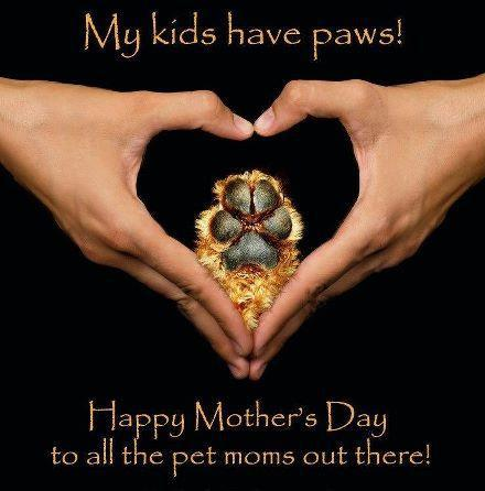 Happy Mother's Day to Pet Mom's